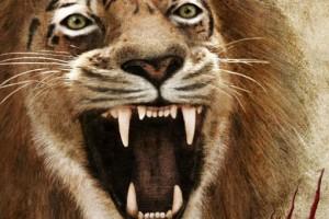 wildcats_interview_slider