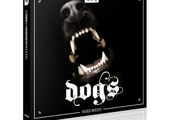 dogs_detail